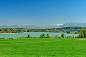 Tachinger and Waginger See with Dachstein and Tennengebirge in the background, Tachinger See, Benediktradweg, Upper Bavaria, Bavaria, Germany