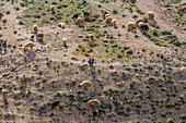 A shepherd with his flock in the hills of Shoubak, Jordan