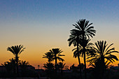 Palm trees in the Menara Gardens during sunset in Marrakech, Morocco