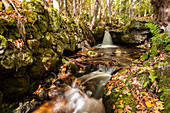 A small waterfall in the Ysperklamm in Lower Austria in autumn
