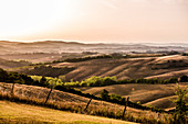 Hilly landscape with sunburnt fields in midsummer, Buonconvento, Tuscany, Italy