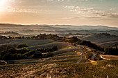 Group of riders during evening rides in a hilly landscape, Buonconvento, Tuscany, Italy
