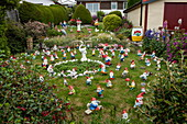 Hundreds of garden gnomes populate this garden and have become one of the city's highlights, Stanley, Falkland Islands, British Overseas Territory