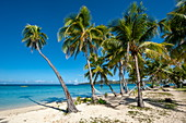 Empty hammocks surrounded by palm trees on a sunny beach seduce the visitor, Malolo Lailai Island, Mamanuca Islands, Fiji, South Pacific