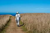 A person wearing a hat walks along a path through a field towards the ocean in the distance, Kaikoura, South Island, New Zealand