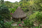 A hut covered with palm fronds stands surrounded by lush greenery, Santa Marta, Magdalena, Colombia, Caribbean