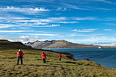 Passengers of the expedition cruise ship Sea Spirit (Poseidon Expeditions) walk across a thick carpet of grasses while the ship is anchored in the background, Alkhornet, Isfjord, Spitsbergen, Norway, Europe