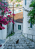 Cat looks out over the town of Skiathos, Greece
