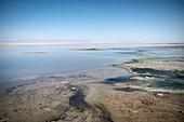 Flamingos in Laguna Chaxa, Salar de Atacama Desert, Antofagasta Region, Chile, South America