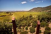 Wein Anbauflächen, Weingut Lapostolle, Santa Cruz, Colchagua Tal (Weinanbau Gebiet), Chile, Südamerika
