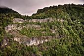 steep rock face with tree cover, Parque Salto Los Mañios, Lago (Lake) Ranco, Region de los Lagos, Chile, South America