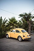 yellow VW Beetle parked in front of palm trees, Valparaiso, Chile, South America