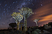 Milk route over quiver tree forest at night, Aloidendron dichotomum, Keetmanshoop, Namibia