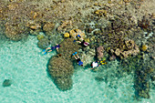 Snorkeling on the house reef of Lissenung, New Ireland, Papua New Guinea