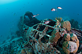 Japanese Kate Bomber wreck, New Ireland, Papua New Guinea