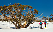 Ski tour to Spargo's Hut in the Alpine National Park, Victoria, Australia