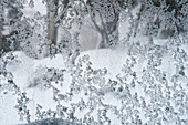 Ice crystals have formed on the window of the Merrits ski lodge in the Thredbo ski area, NSW, Australia