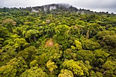 France, Guyana, French Guyana Amazonian Park, heart area, the top of Mount Itoupe (830 m), rainy season, aerial view of the cloud forest from the transport helicopter of the scientific team