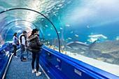 France, Alpes Maritimes, Antibes, Marineland, marine park, shark tunnel