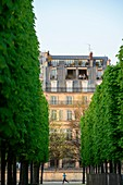 France, Paris, area listed as World Heritage by UNESCO, a couple on their balcony along the Rue de Rivoli and a jogger seen from the Tuileries gardens
