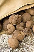France, Vaucluse, Monteux, The Ventoux Truffle, weekend discovery and tasting, black winter truffle (tuber melanosporum)