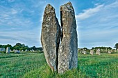 France, Morbihan, Gulf of Morbihan, Carnac, alignment of megaliths of Carnac, menhir split