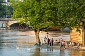France, Paris, the banks of the Seine area listed as World Heritage by UNESCO, the flood of the Seine of 3 June 2016, flooding on the island Saint Louis