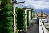 Frankreich, Paris, Boulevard Hausmann, der Garten der Galerie Lafayette, 1000 m2 großes städtisches Begrünungsprojekt für den Anbau von Erdbeeren, Himbeeren, essbaren Blumen und aromatischen Pflanzen