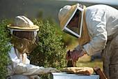 France, Var, Le Castellet, Beekeepers, miellerie de l'oratoire
