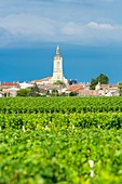 France, Gironde, Saint-Estephe, Saint-Etienne parish church and the Medoc vineyard, AOC Saint-Estephe