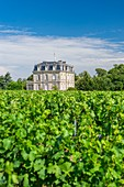 France, Gironde, Begadan, Chateau La Tour de By, vineyard of 94 ha (AOC Medoc), member of Union des Grands Crus de Bordeaux