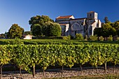 France, Charente, Bouteville, Cognac vineyard, Saint Paul church