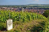 Frankreich, Marne, Ay, Marne-Tal, grenzüberschreitendes Grundstück in einem Weinberg der Champagne, UNESCO Weltkulturerbe, mit einem Dorf und einer Kirche im Hintergrund