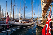 France, Alpes Maritimes, Cannes, the old harbor, the old sailing ships and the sailboats moored to the quay Max Laubeuf, every year in September take place the Régates Royales of Cannes