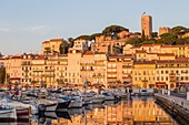 France, Alpes Maritimes, Cannes, district of Suquet, old harbor, facade of the houses of the quay Saint-Pierre, in the background the Tower of Suquet