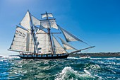 France, Finistere, Brest, Brest 2016 International Maritime Festival, large gathering of traditional boats from around the world, every four years for a week, The Recouvrance is a replica gaff rigged schooner, ambassador boat and property of the city of Brest