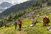 Encounter of hikers with local cowherds, Trekking del Laghetti Alpini, Ticino, Switzerland