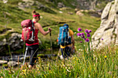 Flowers and hikers in the Randinascia, 3rd day's trekking del Laghetti Alpini, Ticino, Switzerland