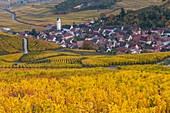 France, Haut-Rhin, Alsace Wine Route, Katzenthal, Saint-Nicolas Church, Wineck Castle, vineyard