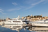 France, Alpes Maritimes, Cannes, the old port and its yachts from the Albert Edouard jetty, in the background the Suquet with the bell tower of the Church Notre-Dame-de-l'Espérance and the tower of Suquet