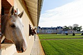 France, Gironde, Canejan, Pessac Leognan, Chateau de Rouillac, stables