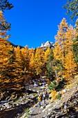 France, Hautes-Alpes, Nevache, Vallee Etroite in fall, Grand Seru (alt : 2889 m) in the background