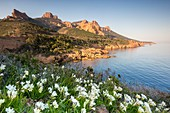France, Var, corniche of Estérel, Anthéor municipality of Saint Raphaël, the creek of Petit Caneiret seen since the tourist route of the Road of the Mimosa, in background the Saint Pilon and the Cap Roux