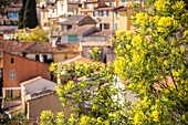 France, Var, Bormes-les-Mimosas, village of departure in the kilometer 0 on the tourist route of 130 km of the Road of the Mimosa
