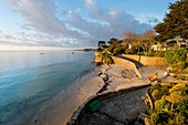 France, Morbihan, Peninsula of Quiberon, St-Pierre-Quiberon, fisherman at sunrise in Kerhostin