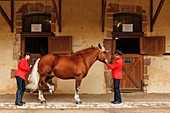 France, Aveyron, listed at Great Tourist Sites in Midi Pyrenees, Rodez, Haras National Rodez, presentation of horses