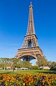 France, Paris, the Eiffel Tower in spring
