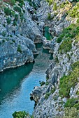 France, Herault, Herault gorge, river flowing along the Herault gorges