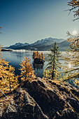 Autumn forest on Lake Sils in the Upper Engadine, St. Moritz in the Engadine, Switzerland, Europe