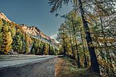 Herbstlicher Wald am Silsersee im Oberengadin, Sankt Moritz im Engadin, Schweiz